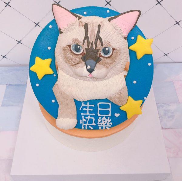 台北寵物生日蛋糕推薦,超可愛化暹羅貓客製化造型蛋糕