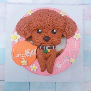 超可愛貴賓狗造型蛋糕,客製化寵物蛋糕宅配蛋糕推薦